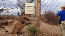 The Lion is Gonna Get You || ViralHog