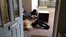 Dog Gets one Sweet Surprise || ViralHog