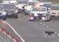 Black Swan Holds Up Peak Hour Traffic on Auckland Motorway