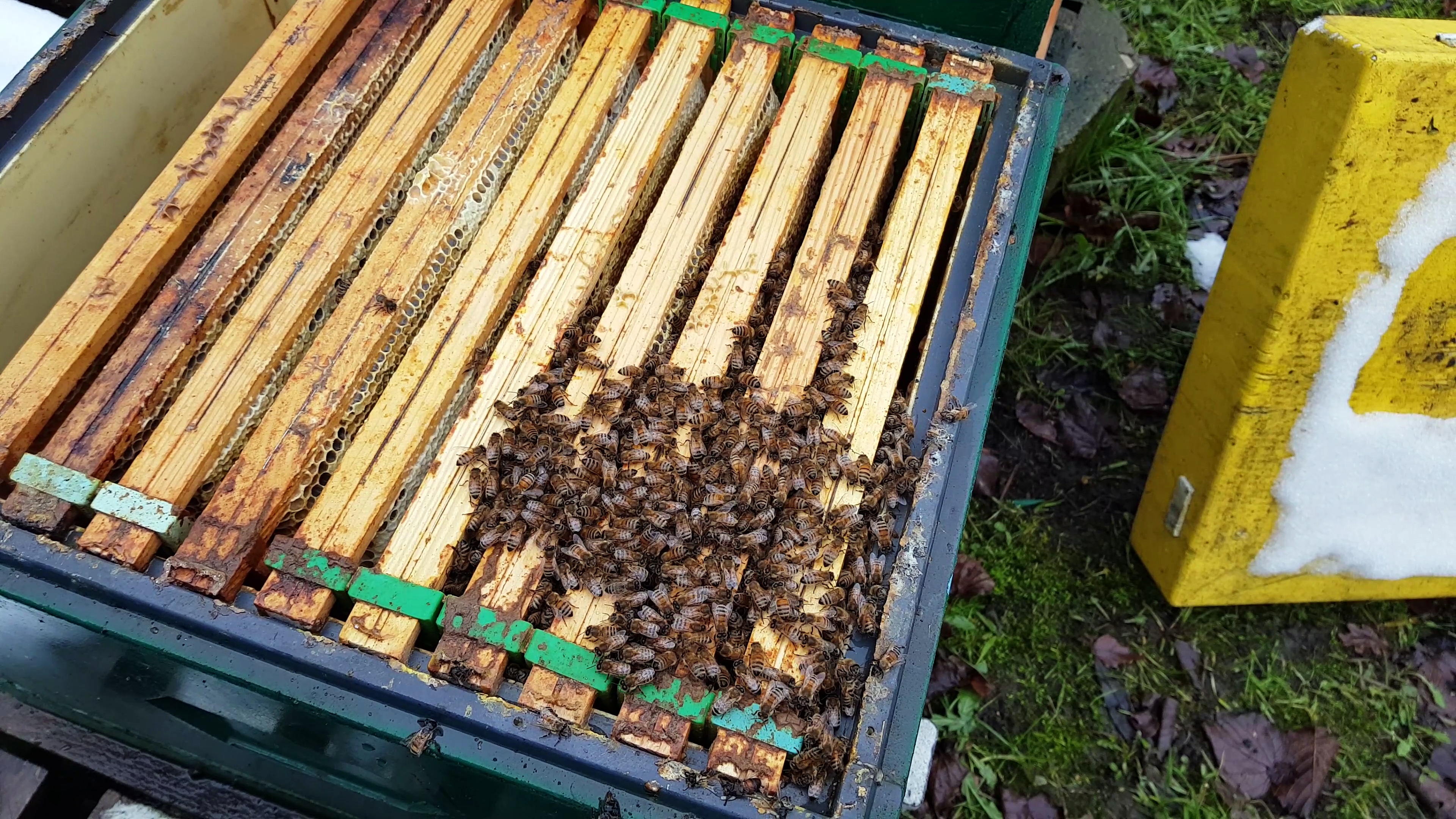 helping bee colony in winter, translating food