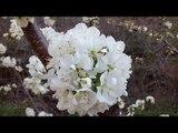 primavera,flores y musica