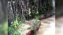 Vidéo chat vs crocos: un chat est jeté dans un lagon infesté de crocodiles