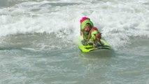 Estos Perros De Surf Te Iluminarán El Día