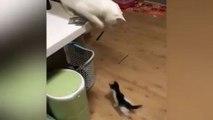 Un chat joue avec un chaton