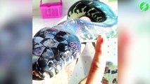 La peau de ce serpent est juste SUBLIME... Serpent holographique