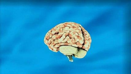 Brain - 6840