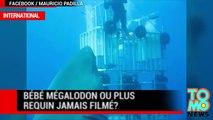 Requin géant : bébé mégalodon ou plus gros requin jamais filmé?