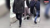 Turquie : quand un chat fait la loi et trolle les usagers du métro