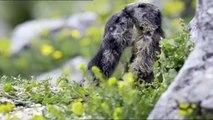 Le plus beau pays du monde - Parce que les marmottes, c'est mignon France 2 17/12/2013