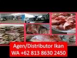 PROMO!! WA +62 813 8630 2450 Tetelan Ikan Kakap Putih di Jakarta