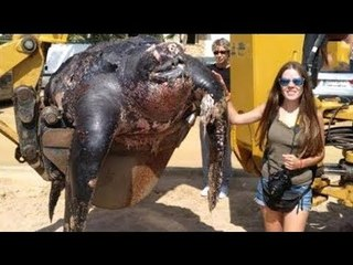 GIANT Turtle Found On The Spanish Beach