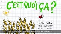 Les pâtes au blé complet cultivé sans insecticides : Carrefour, meilleur chaque jour (pub TV 2017)