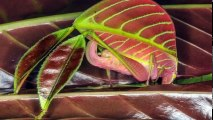 10 Crazy Newly Discovered Living Animal Species