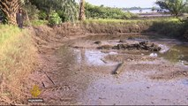 Nigerians seek oil spill compensation from Shell