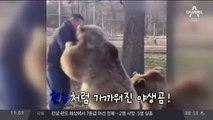 갈색곰과 친구 된 사나이