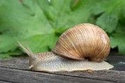 Tout savoir sur les mollusques
