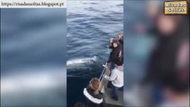 Tourists greeted unusually by a whale