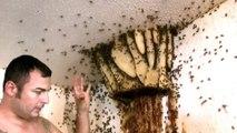 Il retire un nid d'abeille énorme torse nu sans craindre les piqûres d'abeilles!