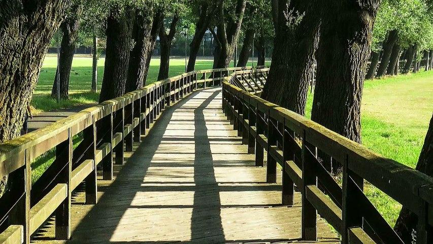 Trauerwege mit Bestattungen Verlage