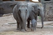 Les animaux à la plus longue espérance de vie