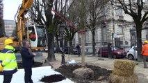 """François Bayrou : """"pour un arbre coupé, trois arbres plantés"""""""