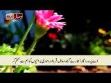 Talawat Quran Majeed