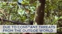 Rare footage of indigenous Brazilian Kawahiva tribe 'on the edge of extinction'