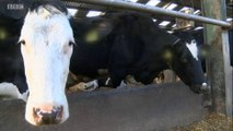 BBC1_Look North (East Yorkshire & Lincolnshire) 28Feb18 - farmers facing abuse & physical threats from militant vegans