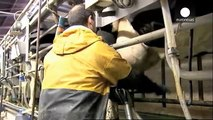 Time running out for EU milk quotas