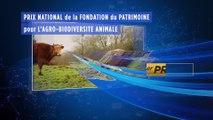 Maëve et Stéphane Terlet, éleveurs de vaches de race Froment du Léon dans les Côtes d'Armor, on été récompensés par la fondation du patrimoine et le laboratoire Ceva. Ils participent à la diversité des races bovines.