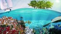 Protecting Palau's rich biodiversity   Global Ideas