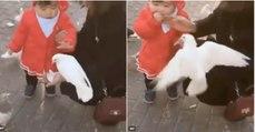 """Pombo sente na pele a """"delicadeza"""" de uma criança ao pegar na comida sem autorização"""