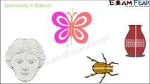 Maths Symmetry part 3 (Symmetry in Nature) CBSE Class 7  Mathematics VII