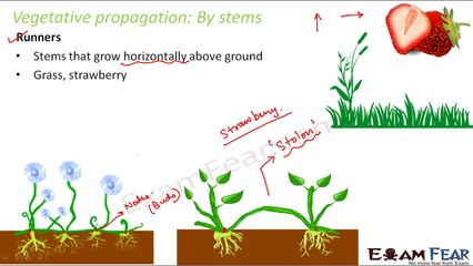 Asexual reproduction plants grafting dailymotion