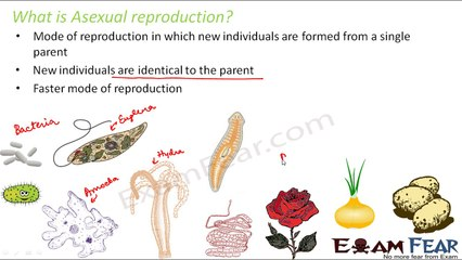 Apicomplexa asexual reproduction regeneration