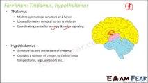 Biology Neural Control & Coordination part 17 (Forebrain: Thalamus, Hypothalamus) CBSE class 11 XI