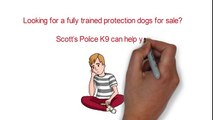 Get secure with fully trained protection dogs for sale