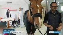 Dijon : un cheval dans l'Ehpad à la rencontre des personnes âgées