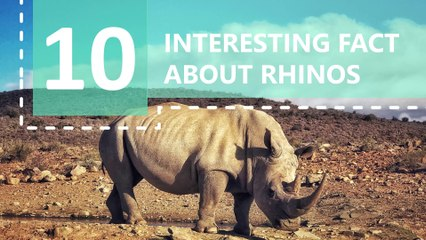 10 Interesting Facts about Rhinos