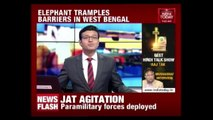 Elephant Tramples Barriers In West Bengal