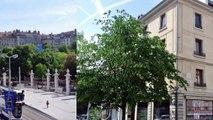 A louer - Appartement - Genève (1204) - 7 pièces - 275m²
