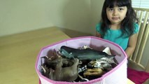 Schleich Safari My 4 Year Old Daughter Collection She Recognize a Lot of Animals Learn Animals