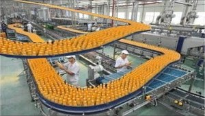 Amazing Machine Technology Processing Fruits, Vegetables And Flower