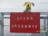 Kiki le chien mauve fait le tour du monde