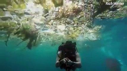 Un plongeur se filme nageant dans un océan de déchets