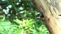 Beautiful wild birds: The parent birds feeding their young birds #6