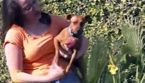 Dog Whisperer S02E16 Vicki & Taz, Punkin and Maddy