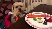 Ce chien mange à table avec ses pattes pour tenir une carotte !