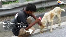 Dog Stuck On Highway In India Slowly Trusts Rescuers _ The dodo