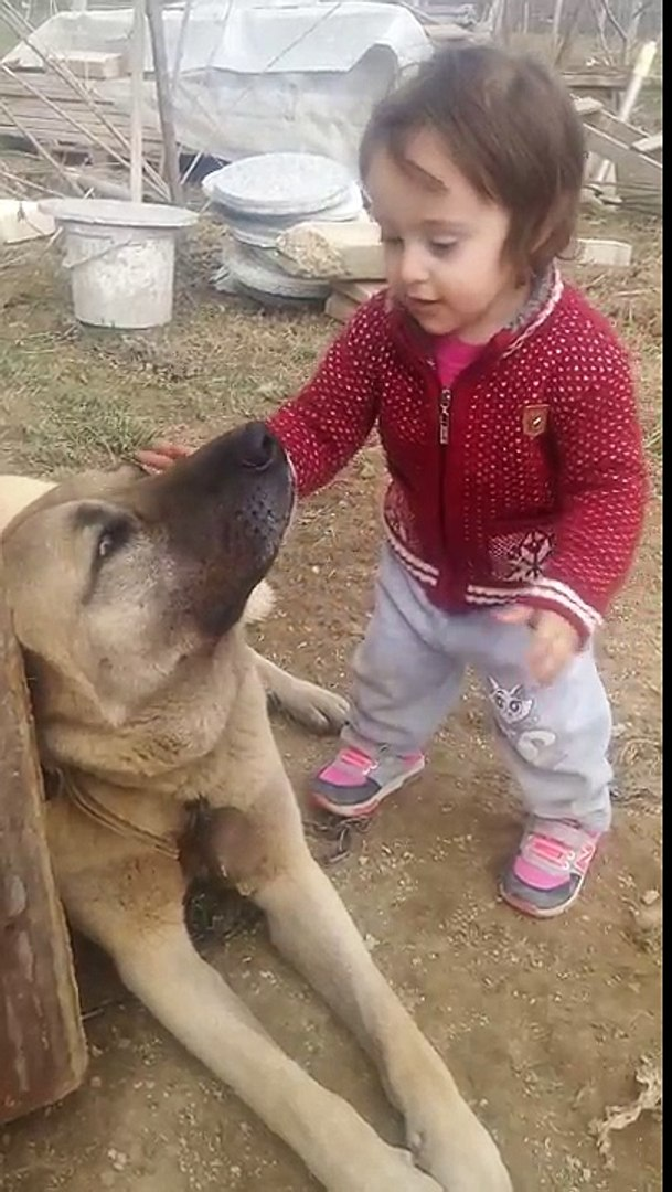 SiVAS KANGAL KöPEĞiNiN ÇOCUK KARŞISINDAKi SABRI - KANGAL DOG and BABY